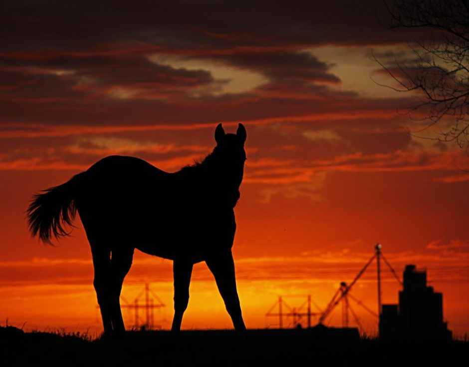Horse on a Farm at sunset, silhouette