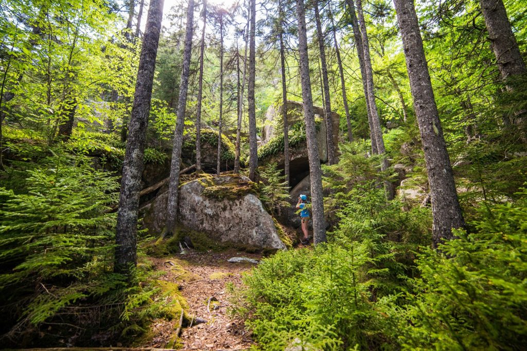 Forest in Maine with hiker taking pictures