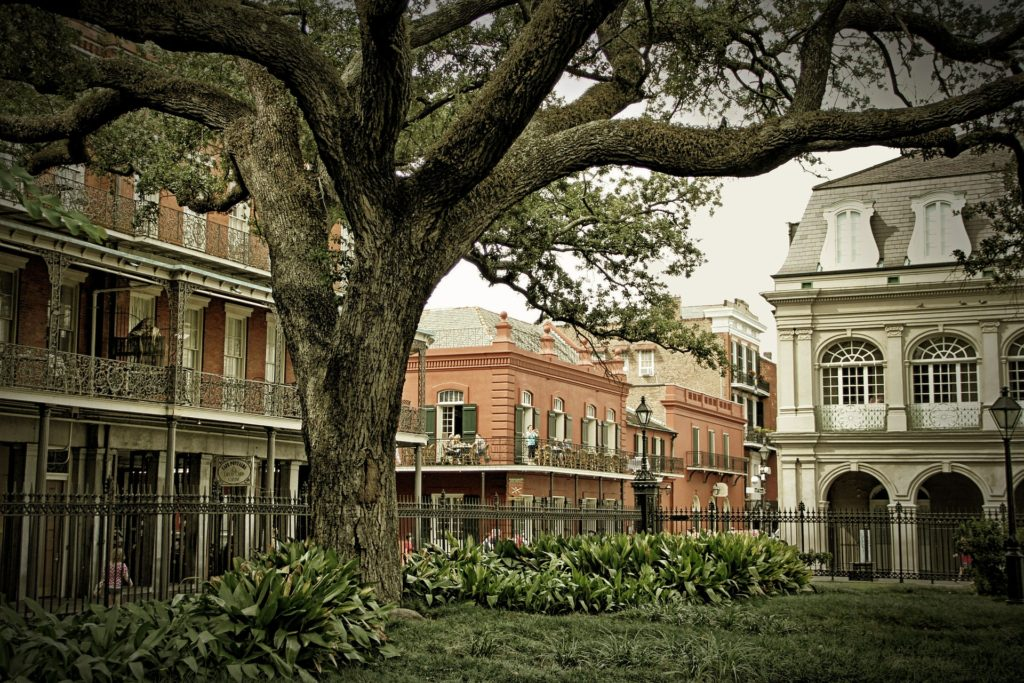 French Quarter in Louisiana, old sprawling tree