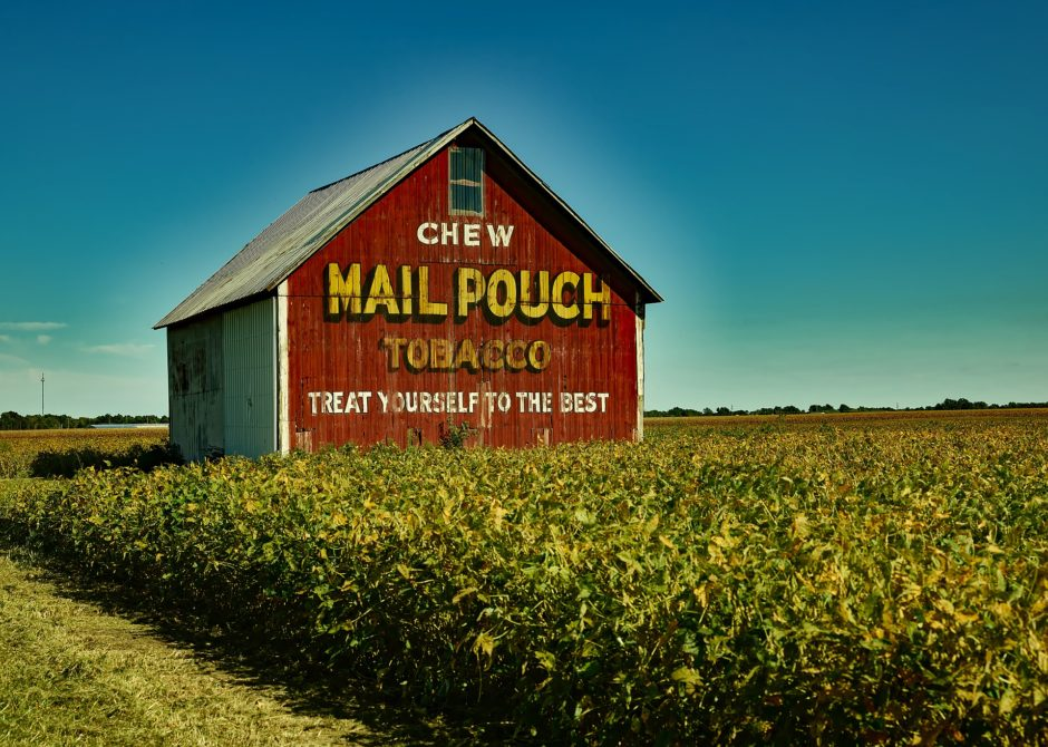 Mail Pouch Tobacco Barn in a field in Indiana