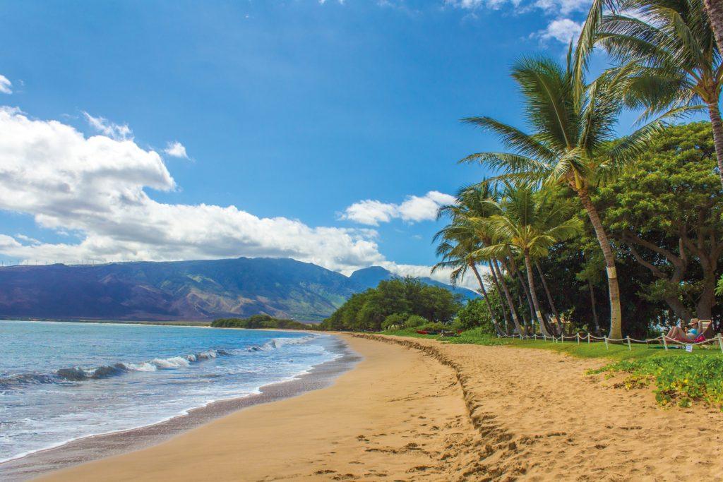 Hawaii beach, palm trees and mountains