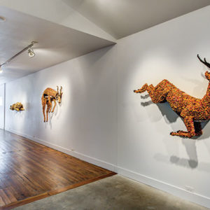 Austin at museum, deer on the wall