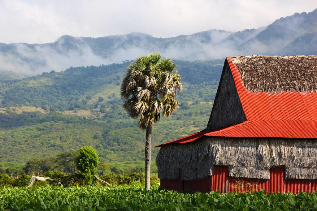 procigar (2) Davidoff tobacco fields