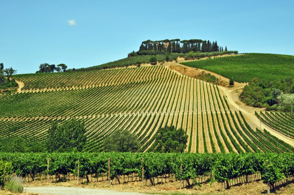 I vigneti del Chianti - Toscana wine in the heart of Tuscany 1