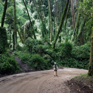 Costa Rica secret forests travel guide