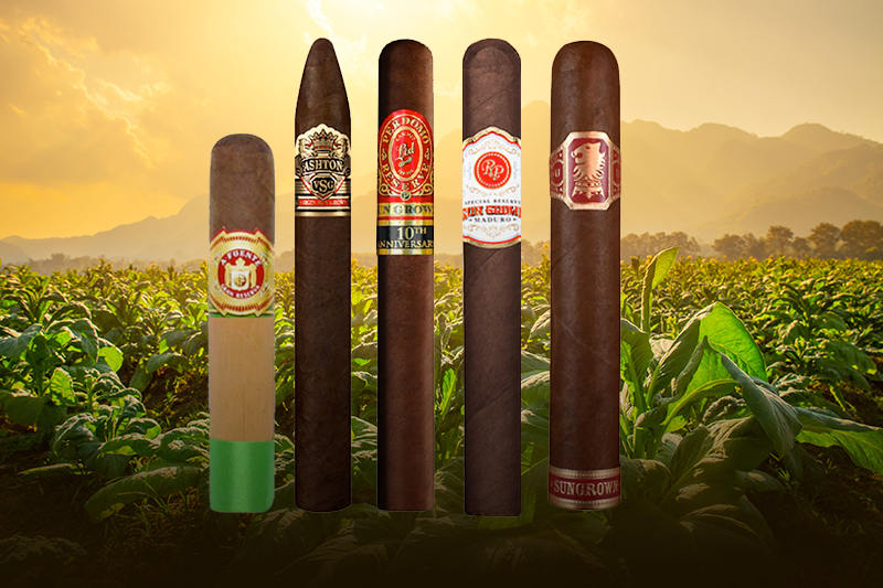 5 Sun Grown Cigars to Smoke Today
